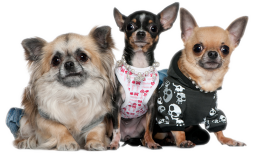 Троица рокеров-собак