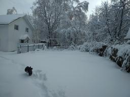 Бежим по снегу