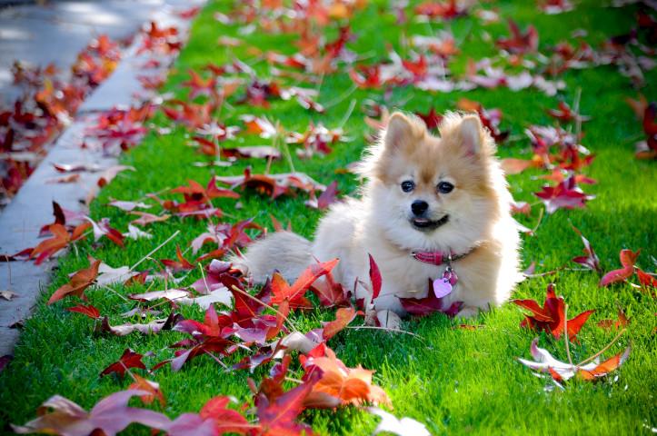 Собака лежит в осенних листьях