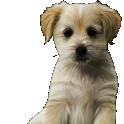 Плохо обрезанная собака