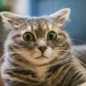 Гипотермия у кошек, переохлаждение