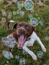 Сезон охоты на мыльные пузыри открыт
