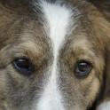 Яд для собак - чем может отравиться собака