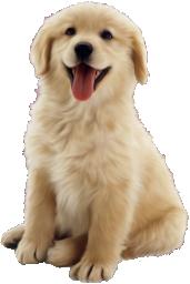 Весёлый щенок
