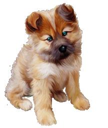 Зеленоглазый щен