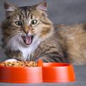 Как правильно кормить кошку