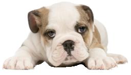 Мордочка грустной собачки