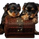 Два щенка с сундуком