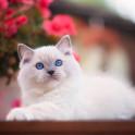 Средства от инфекции мочевыводящих путей у кошек
