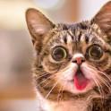 Диарея у кошек