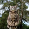Бактериальная пневмония у кошек