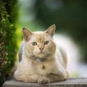 Психические расстройства у кошек
