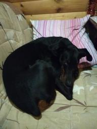 Лукас лёг спать