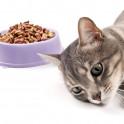 Кошка не ест что делать