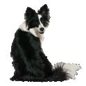 Чёрно-белый пёс