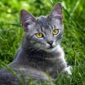 Язвы на коже у кошек - дерматозы, эрозивные или язвенные