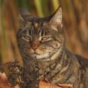 Диабет у кошек - симптомы и лечение болезни